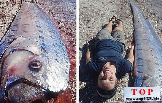 墨西哥驚現5米長皇帶魚,活著的白龍王(www.top123.biz)